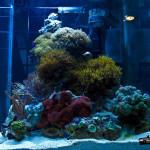 Индонезия - оформление аквариума