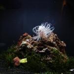 Полянка - оформление аквариуема