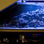 Скошенный угол - оформление аквариума