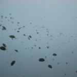 Стекло - пример оформления аквариума