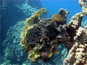 Причудливые коралловые образования
