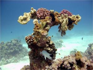Удивительные рифы мелководья