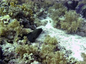 В прилегающих коралловых садах много мурен