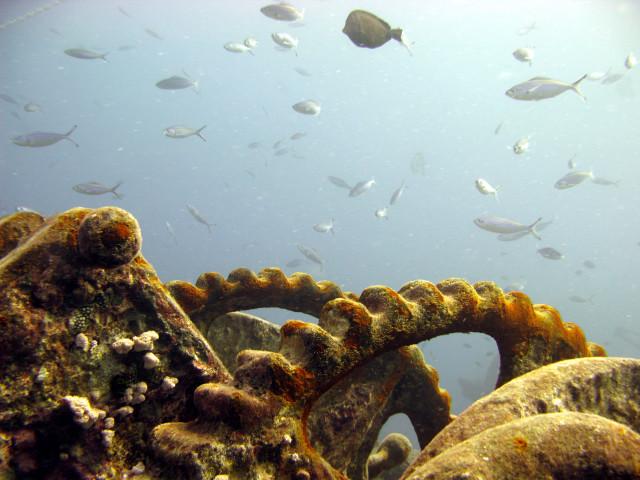 Пример акваконцепта в природе