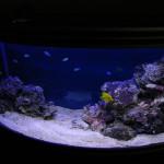U-Concept - оформление аквариума