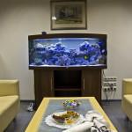Оформление аквариума - новая классика