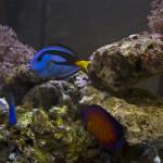 Оформление аквариума - Каменный лес